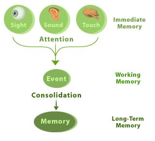 درجات الذاكرة الثلاث، وفاعلية خزن المعلومات كلما استخدم الانسان حواس اكثر في محاولة حفظ الشئ