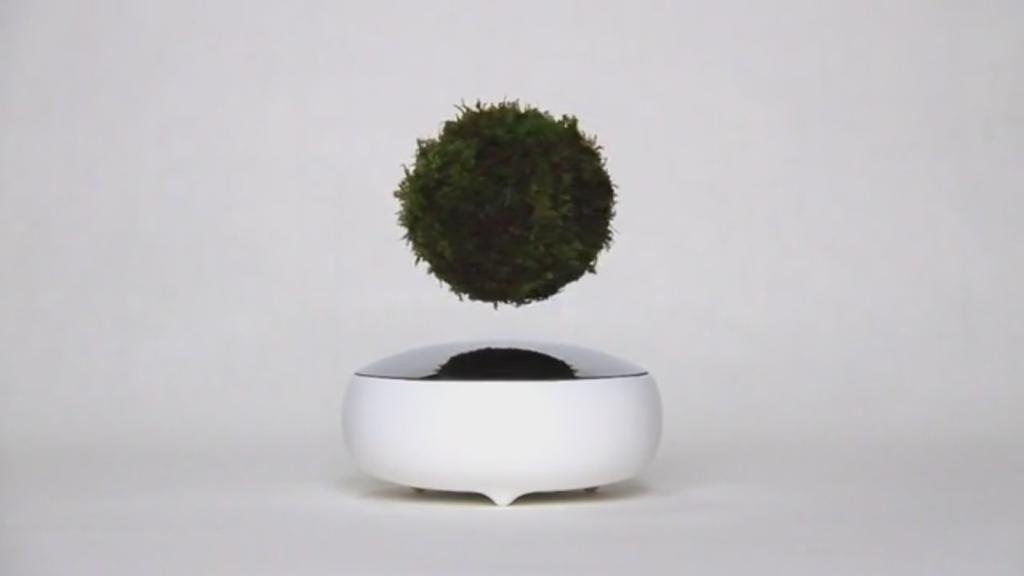 نباتات زينة طائرة عبر العوم المغناطيسي
