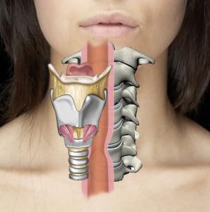 anatomydisplaced