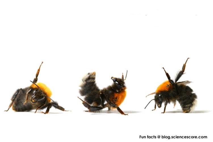 لغة النحل الرقص