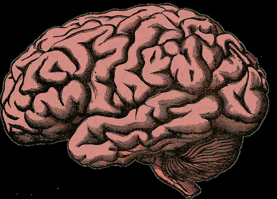 دماغ الانسان