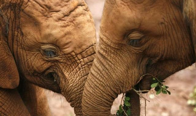 الأخلاقيات بين الحيوانات