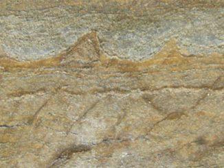 الاحافير الأقدم المكتشفة في جرينلاند