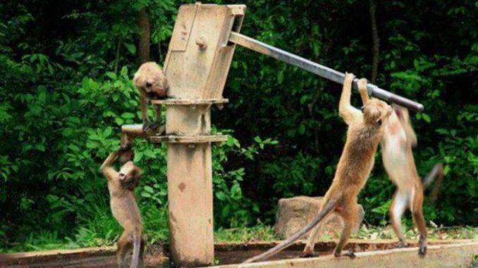 الأخلاقيات التطورية