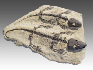 احفورة لأحد الزواحف