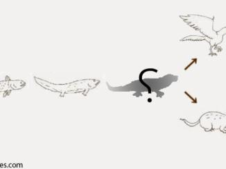 أحافير ونماذج من الكائنات الأنتقالية