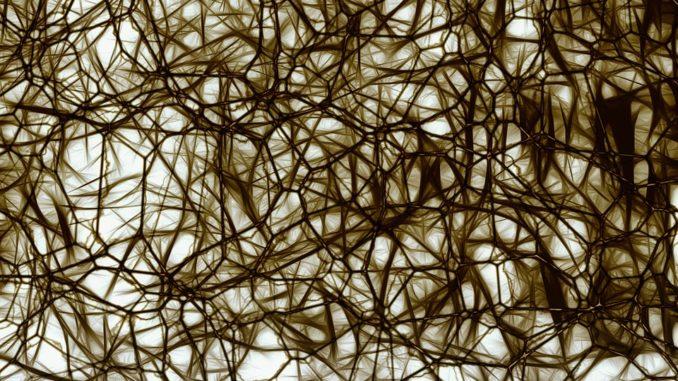 خلايا عصبية