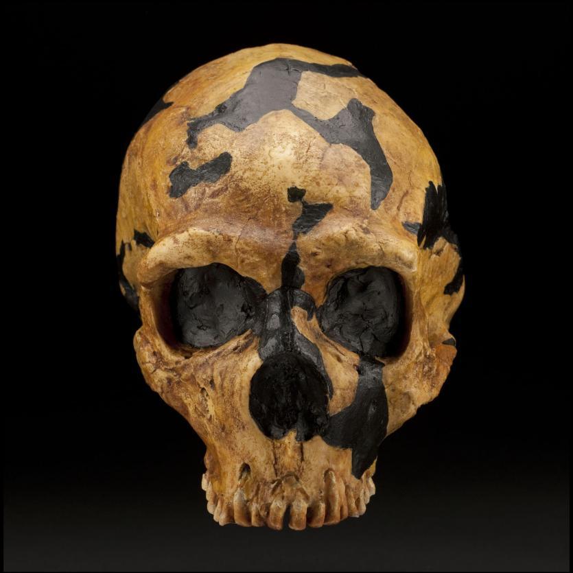 جمجمة إنسان شانيدر