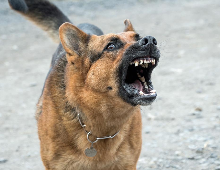 كلب خطير
