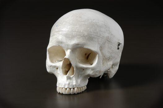 جمجمة انسان