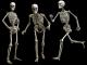 عظام الانسان