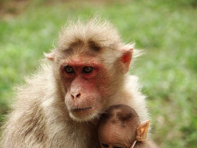 الرئيسيات