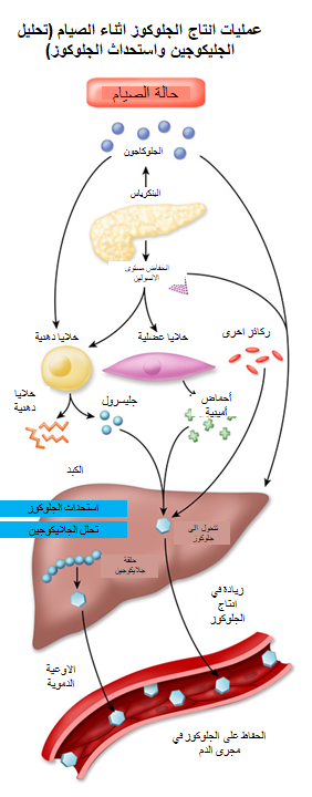 مخطط عملية انتاج الجلوكوز