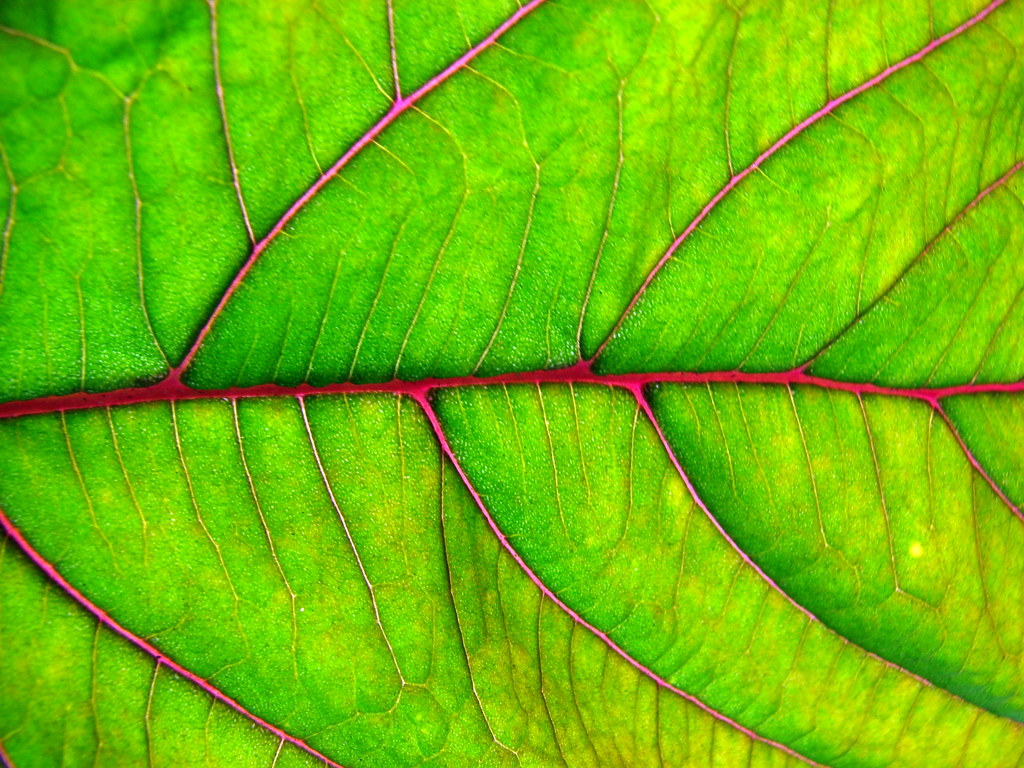 ورقة نبات