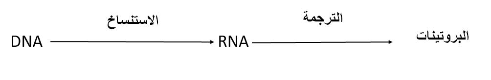 الدوغما أو العقيدة المركزية في الوراثة