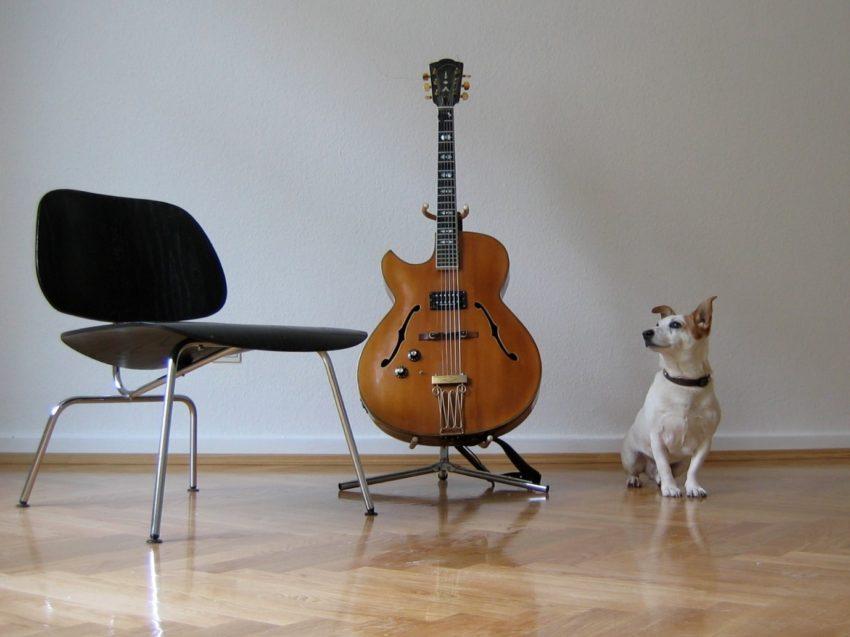 الحيوانات والموسيقى