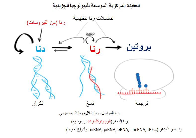 العقيدة المركزية للبيولوجيا الجزيئية