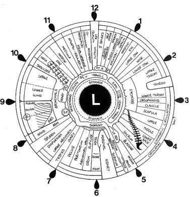علم القزحية